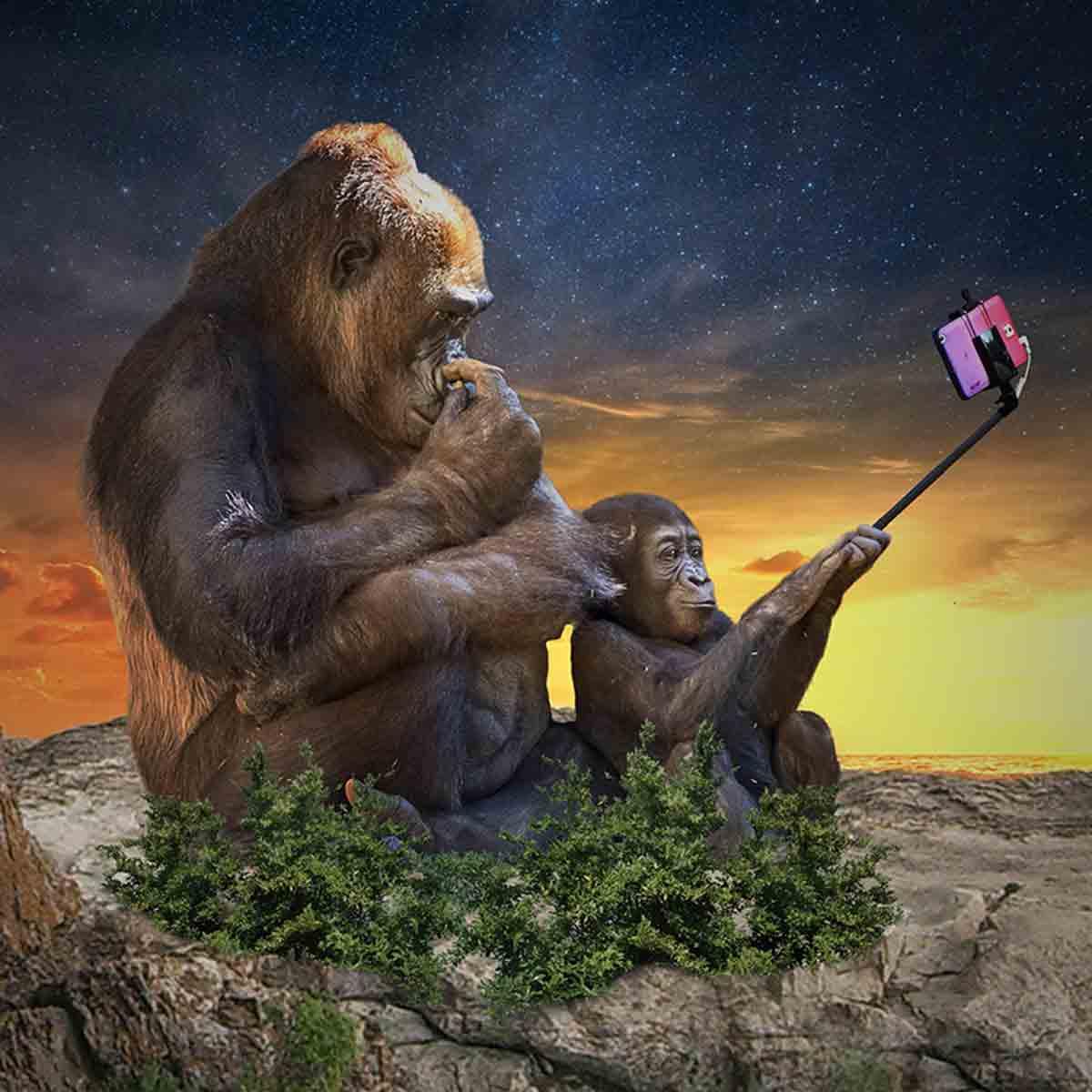 Comprar palo selfie, ¿Cual es el mejor?