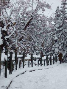 fotografiar nieve
