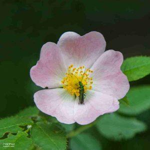 insectos en una flor