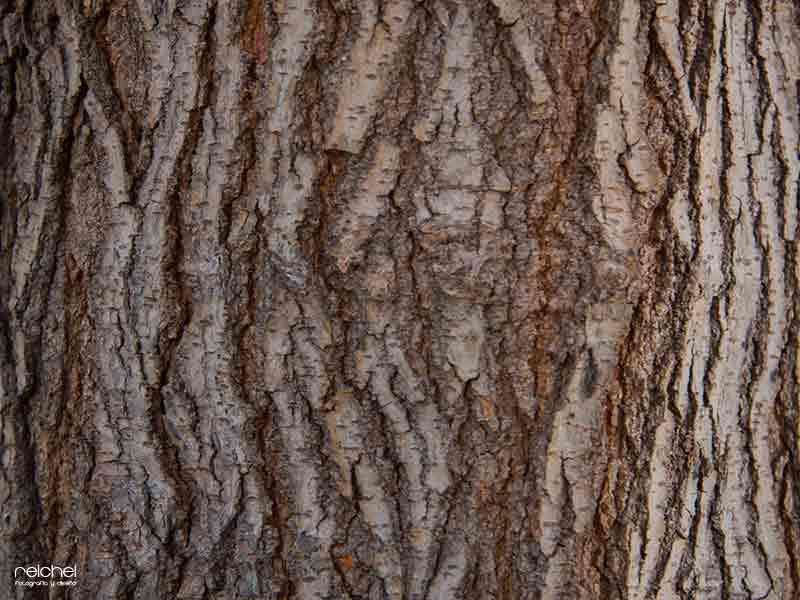 texturas naturales