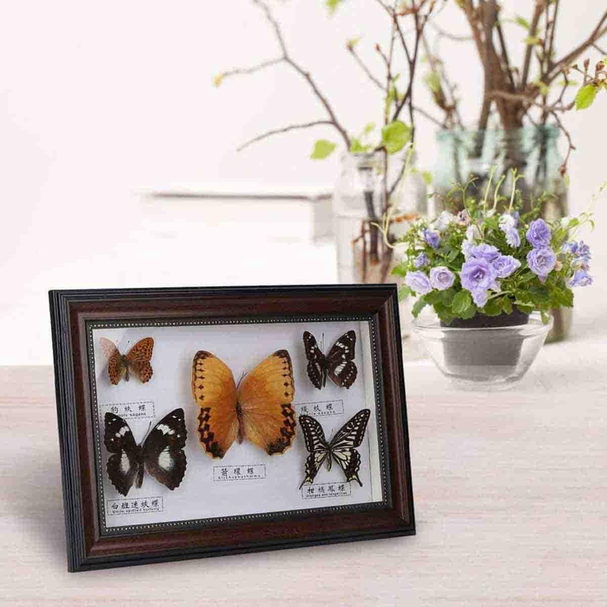 reglo de mariposa para amigos